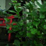杭全神社夏祭り