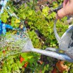 水でふくらむ野菜の土